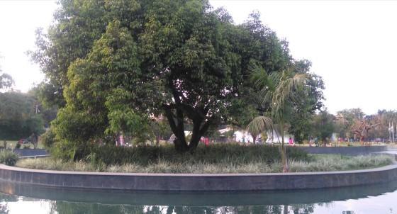Osho Tree 1, Bhanwartal Park of Jabalpur - 20181021