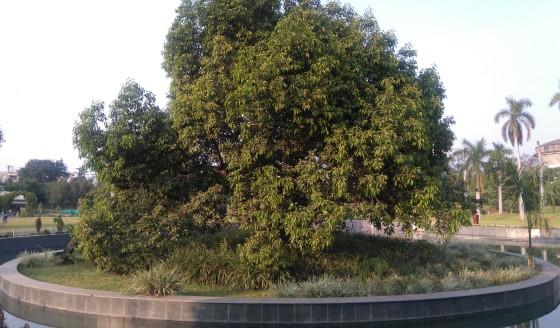 Osho Tree 3, Bhanwartal Park of Jabalpur - 20181021